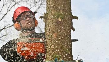The best safety footwear for lumberjacks